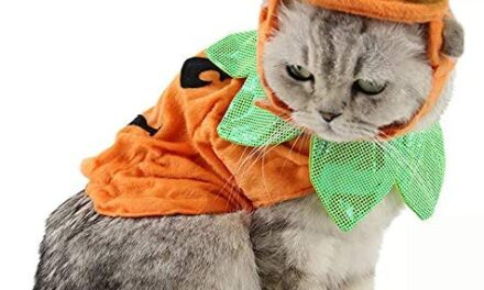 Bolbove Pet Pumpkin Costume for Cats & Small Dogs Party Halloween Cosplay Free Size Orange